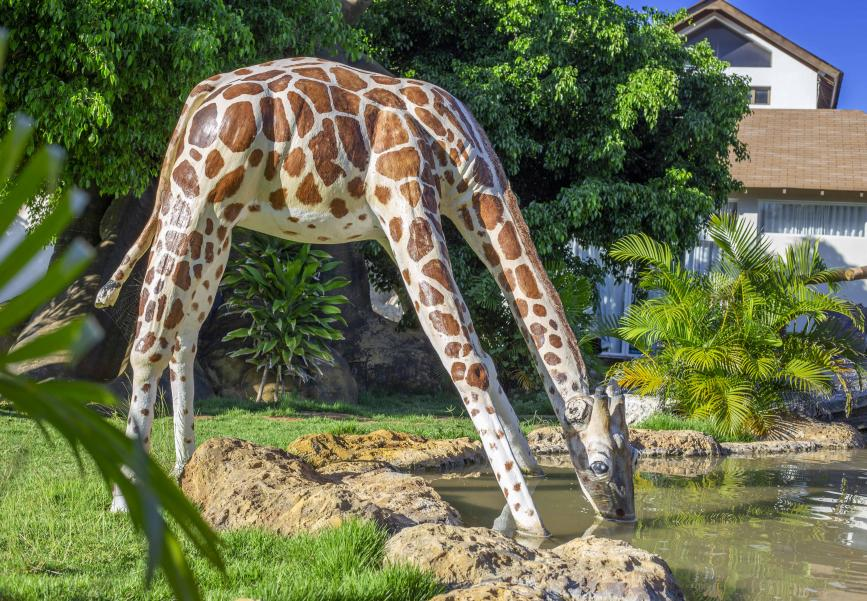 Safari park at Sosua Ocean Village